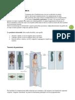 La Posizione Anatomica