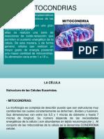Tema 1.5 Mitocondrias y Peroxisomas