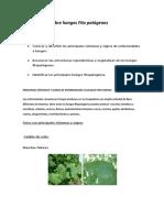 Fitopatologia_guia de Hongos Fitopatogenos