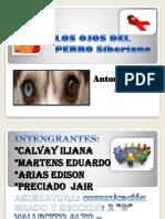 Los Ojos Del Perro Siberiano Trabajo de Comunicacion