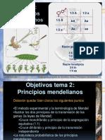 documents%5Cgenetica_gen%5CTema 2 Principios mendelianos2014225-1844.pptx