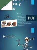 Presentación Anatomia de Cabeza y Cuello