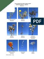 Catalogo Floristico de Chiguata