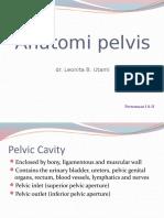 Anatomi pelvis.pptx