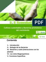 INFORMACION BACTERIAS AGRICULTURA (1).pdf