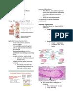 Histology - Epithelial Tissues