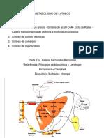 metabolismo-LIPIDEOS