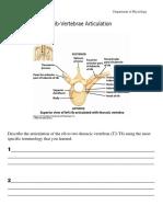 Rib-Vertebrae Articulation.pdf