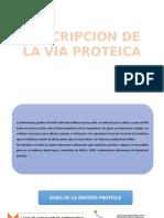Descripcion de La via Proteica