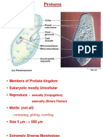 protozoa unit four F.Y.ppt