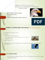 Exponer Aguila y Salvia