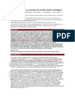 La Ferroptosis Es Un Proceso de Muerte Celular Autofágica