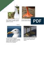 Patas y Picos de Aves