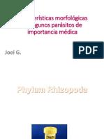 Morfología Parásitos intestinales