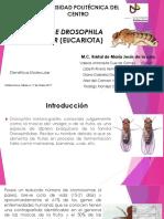Genoma de Drosophila Melanogaster Eucariota