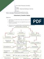 Actividad 6  Estructura y Función Celular