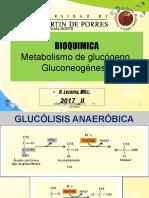 Bq 17 Chi 4 Glucogeno Heli