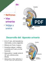 Embrio Renal y Malformaciones Cong. 2015
