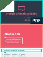 Modelo animal.pptx