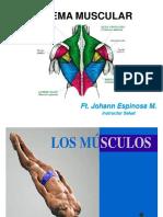 SISTEMA MUSCULAR (1).pdf