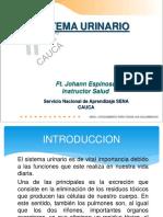 SISTEMA URINARIO 1.pdf