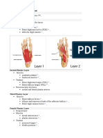 Layers of the Plantar Foot