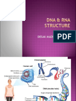 Dna & Rna Structure