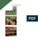 Actividades Económicas Primarias Secundarias y Terciarias
