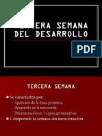 04 Disco Germinativo Trilaminar
