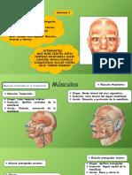 Cara-Anatomia (1).pptx