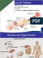 anatomia2016-esp
