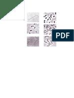 procariotas-y-eucariotas atlas.docx