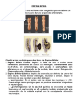 Niveles Espina Bifida
