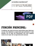 exposicincidosnucleicos-120417115208-phpapp01