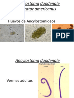 Ancyklostomideos y Strongyloides Imprimible