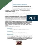 Caracteristicas-Del-Floklore-Peruano.doc