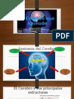 Como Aprende El Cerebro 3