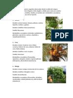 Vegetales ,Botanica-metabolitos secundarios