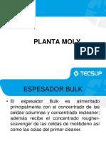 Planta Moly