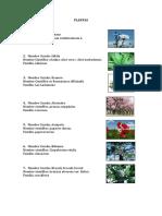 Nombres Cientificos Plantas (El Salvador)