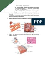 Taller Anatomía Cardio