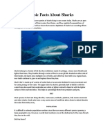 Basic Facts About Sharks