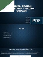 Órbita, Región Orbitaria y Globo Ocular