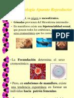 15. Embriología Del Aparato Reproductor