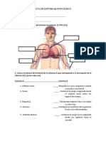 Prueba Sistema Circulatorio