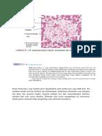 Histologi Pankreas (Insula Pancreatica)