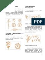1606091437.DICOTILEDONEAS  Parte -I -.pdf