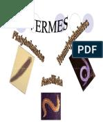 Vermes-Platyhelmintes-Nemathelminthes