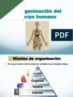 Anatomia y Fisiologia Del Cuerpo Humano
