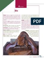 Raza Belier Ingles.pdf
